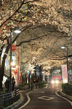 The 30 Most Beautiful Places in the World - Cherry Blossom - Holiday Everyday Aesthetic Japan, City Aesthetic, Japanese Aesthetic, Aesthetic Backgrounds, Aesthetic Wallpapers, Beautiful Places, Beautiful Pictures, Japon Illustration, Japan Travel