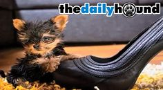 This Is The Smallest Dog In The World - The Daily Hound \u2014 The Daily Hound