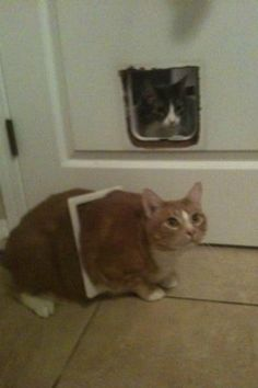And this cat who tried to make it through the cat door: | 19 Cats Who Made Poor Life Choices