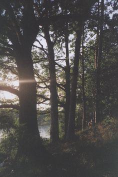 ..Entrega tu alma al bosque y escucha el susurro de los viejos arboles <3