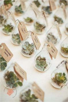 The Ultimate Succulent Wedding Guide - Favors - The Ultimate Succulent Wedding Guide - Favors - wedding decor diy Wedding Favors And Gifts, Affordable Wedding Favours, Succulent Wedding Favors, Creative Wedding Favors, Wedding Tokens, Wedding Guest Favors, Succulant Wedding, Gift Wedding, Handmade Wedding