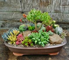 More Growing Succulents, Succulents In Containers, Container Flowers, Cacti And Succulents, Planting Succulents, Vertical Succulent Gardens, Succulent Bonsai, Succulent Gardening, Buddha Garden