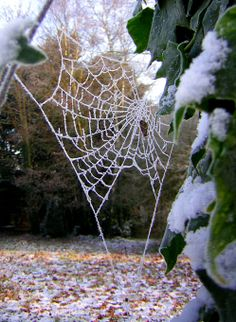 Image detail for -File:Frosty spider web-01-Zenera.jpg - Wikipedia, the free ...