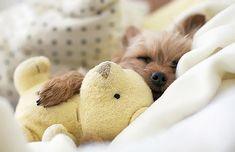 Puppy sleeping with teddy. SO CUTE. <3