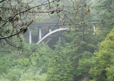Bridge on a misty day at Jedediah Smith Redwoods Sate Park near the Northern California Coast.