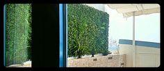 #JardínVertical de #hederas #artificial con sistema #puzzle y #minipalmas colgando. La jardinera la componen #cycas #agaves y #fornios #artificiales #verticalymusgo #Somos #Musgo #Moss #Liquen #Verticales #Decoración #musgomanía #descúbrenos Agaves, Artificial, Aquarium, Window Boxes, Vertical Gardens, Palms, Goldfish Bowl, Aquarius, Fish Tank