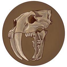 Smilodon Mauricio Anton Of The Skull Of The