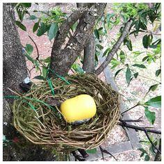 Not a bird house geocache, but a bird's nest with a fake egg. (aussie_geocacher_seemyshell pic) #IBGCp