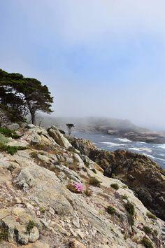 Point Lobos 🌿 © by Hannah Backes