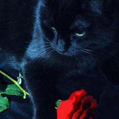 .❥ Beautiful Black Cats ♥