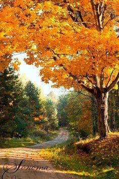 Road and fall foliage (no location given)