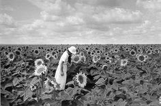 Tournesols by Edouard Boubat Vogue Photo, Photo B, New York City, Berenice Abbott, Magical Images, Special Pictures, Great Photographers, Japan, Photojournalism
