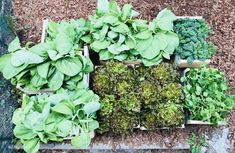 Choux Kale, Centre Hospitalier, Grace, Permaculture, Tour, Sprouts, Vegetables, Urban Farming, Salads