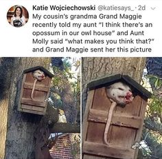 i think there's an opossum in her owl house Cute Funny Animals, Funny Cute, The Funny, Lol, Tumblr Funny, Funny Memes, Funny Tweets, Funny Videos, Tierischer Humor
