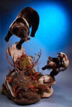 Bear and Wolverine-Dewey Wildlife Studio
