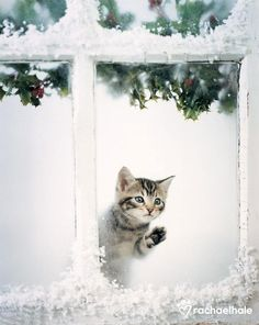 A kitten should know not to go out in the snow
