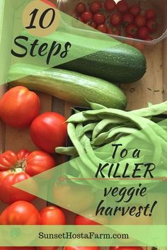 Veggie garden success comes from good pre-planning and thorough follow-through. Follow these steps for a great harvest even if you're a beginner. Gardening love fresh from the farm. SunsetHostaFarm.com Planting Vegetables, Planting Seeds, Growing Vegetables, Vegetable Gardening, Growing Tomatoes, Veggie Gardens, Organic Vegetables, Gardening For Beginners, Gardening Tips