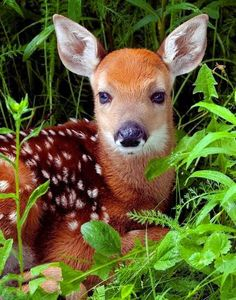 The beauty of the animals wild....! Such a beautiful little Fawn
