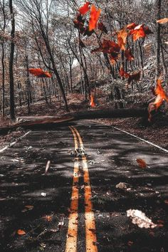 "souhailbog: "" Do you miss fall? By imthejam "" souhailbog: "" Do you miss fall? By imthejam "" Blur Image Background, Blur Background Photography, Desktop Background Pictures, Light Background Images, Studio Background Images, Picsart Background, Photo Backgrounds, Desktop Backgrounds, Fall Pictures"