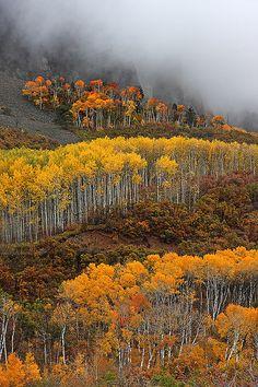 Autumn aspen landscape. Gunnison, Colorado