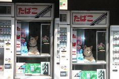Doggie attendant at a tobacco kiosk