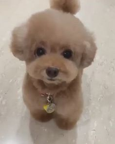 Baby Animals Super Cute, Cute Baby Dogs, Cute Funny Dogs, Cute Little Puppies, Cute Dogs And Puppies, Cute Little Animals, Cute Funny Animals, Cute Cats, Tiny Puppies