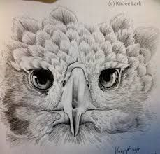 harpy eagle drawing - Pesquisa Google