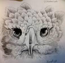 harpy eagle drawing - Pesquisa Google