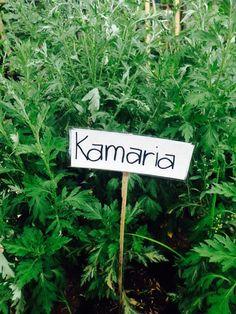 Kamaria