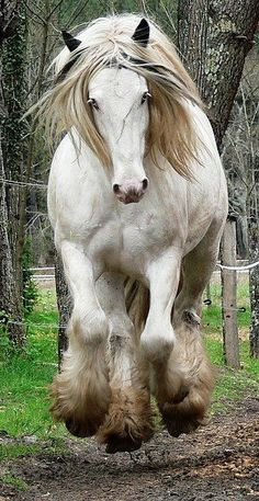 Running draft horse