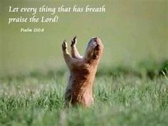 Let everything that has breath Praise the Lord       sunshinereflections.wordpre...