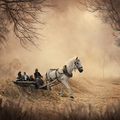 35PHOTO - Caras Ionut - The mill fire