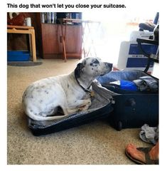 20 Smart Pets Who Suspect You Are Planning To Leave Somewhere