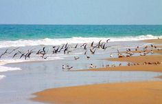 ilha de rango Guiné Bissau African States, Places Of Interest, East Africa, Middle East, Roots, Tourism, National Parks, Wildlife, Babies