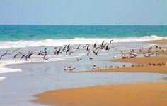 ilha de rango Guiné Bissau