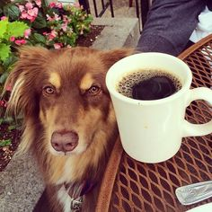 The One Drink Our Fave Celebs Are OBSESSED With #refinery29  http://www.refinery29.com/2016/06/112447/celebrity-coffee-instagrams#slide-12  Amanda Seyfried's dog and coffee are, per her caption, two of her three favorite things. D'aw. ...