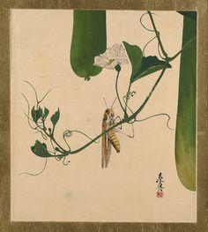 Grasshopper on Gourd Vine, Shibata Zeshin (Japanese, 1807–1891) - Meiji period (1868–1912, 1882 - Lacquer on paper