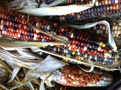 Fall is here! Colorful corn for decorating the home.  Farmers market NYC (photo property of ghaladhriel)