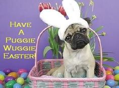 Easter Cat Photo:  This Photo was uploaded by elgatobx. Find other Easter Cat pictures and photos or upload your own with Photobucket free image and vide...