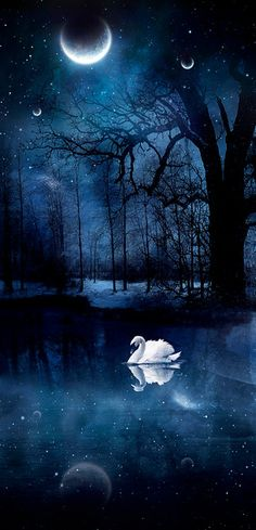 Shop the Real Diamond Art Club™. The sole diamond art painting manufacturer in the United States. Moon Pictures, Beautiful Moon, Swan Lake, Moon Art, Night Skies, Moonlight, Fantasy Art, Dark Fantasy, Nature Photography