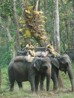 Elephant Safari, Chitwan, Nepal