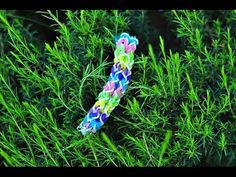 DOUBLE INVERTED FISHTAIL. Designed and loomed by Rena TheCheeseThief Rena on the Rainbow Loom. Click photo for YouTube tutorial.