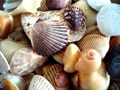 I think that shells are beautiful. This is a photo I took of shells I found on the beach.