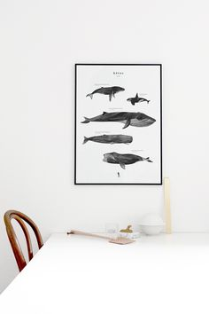 The word 'kētos' in Greek, means a large ocean creature like a sea monster or whale. In this poster, five beautiful whale species are shaped from several different layers of paint textures and strokes. The whales are shown in relative size and are described by their scientific name, approximate size and weight.Size: 50cm x 70cm - 170 g Art print paperThe print is sold unframed, wrapped with the greatest care and shipped (internationally) in a cardboard tube.