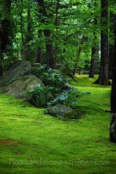Moss path, enhance the existing rock with (in this case hosta) alpine or a collection of fern, etc.
