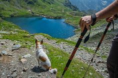 Θες να πας για ορειβασία με τον σκύλο σου; Πρόσεχε αυτά - http://ipop.gr/themata/frontizw/thes-na-pas-gia-orivasia-me-ton-skilo-sou-proseche-afta/