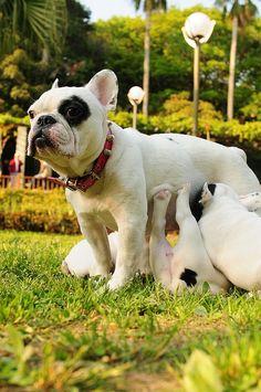 18 Beauty Animal Parenting Moments – Creative Digital Realistic Photography Art - Homemade Ideas (4)