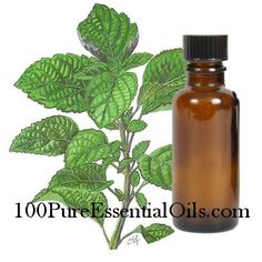 Patchouli Oil - regenerates skin, heals wounds, one of the best for skin care. Highly dilute for topical applications, good for fungal infections, and bacterial infections, ringworm, athletes foot, helps with confusion, indecision, dry skin, parasites,