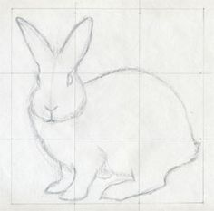 draw a bunny like an artist......art ed central