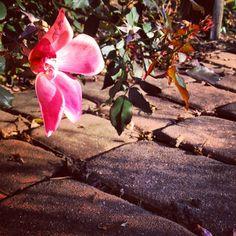 Landscape Lighting Kits, Wall Lighting, Plants, Planters, Plant, Planting
